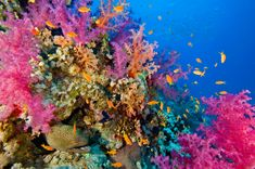 Stunning Coral Reef