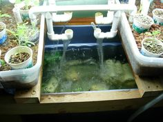 This Pin was discovered by Our Aquaponic Adventures | Organic Gardening + Blogging. Discover (and save!) your own  Pins on Pinterest.