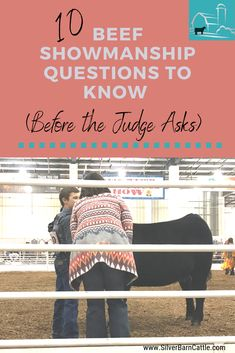 Your answers to a judge's questions can make the difference between finishing at the top of the class or near the bottom. It's important to practice at home so you are prepared when you enter the ring. Livestock Judging, Showing Livestock, Showing Cattle, Show Cattle Barn, Cattle Ranch, Show Cows, Show Steers, Der Richter, 4 H Club