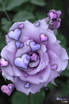 Stars Dazzle In The Mystic Night – This site is designed To Inspire, To Heal, To Motivate and To Thrive! Purple Love, All Things Purple, Pet Psychic, Flowers Gif, Love You Images, Rosa Rose, Photo Composition, Glitter Graphics, Pretty Wallpapers