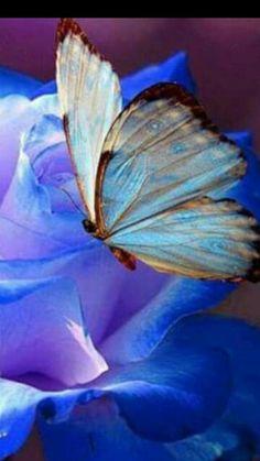 Butterfly n rose