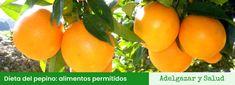 Dieta del pepino: Menú, opiniones y recetas Atkins, Keto, Fruit, Facial, Food, Fitness, Liquid Diet, Cucumber Salad, Easy Vegan Food