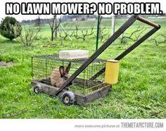 hillbilly lawnmower?