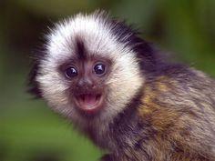 Monos - fondos para teléfonos: http://wallpapic.es/animales/monos/wallpaper-30124
