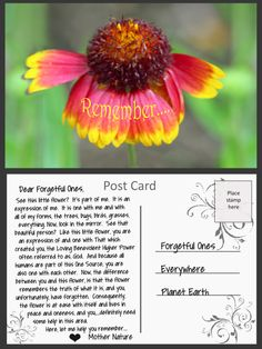 Post Cards from Mother Nature – whereslynda Look In The Mirror, Beautiful Person, Mother Nature, Grass, Messages, Flowers, Grasses, Text Posts