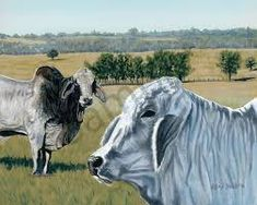 paintings of cattle Rind, Cattle, Cow, Paintings, Google Search, Animals, Gado Gado, Animales, Paint