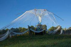Woollaston Estates - time to take the nets off
