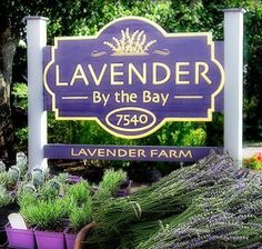 Lavender by the Bay; East Marion - upick during blooms in the June and September before 11:30