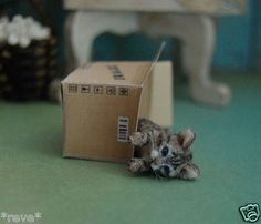 Realistic Kitten w/Box Dollhouse Miniature 1:12 scale Handmade Sculpture by Reve