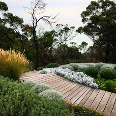 steps enveloped in swathes of plantings lead down to a curved boardwalk and viewing platform with spectacular views of Port Phillip Bay. Australian Garden Design, Australian Native Garden, Modern Garden Design, Landscape Design, Coastal Gardens, Beach Gardens, Outdoor Gardens, Amazing Gardens, Beautiful Gardens