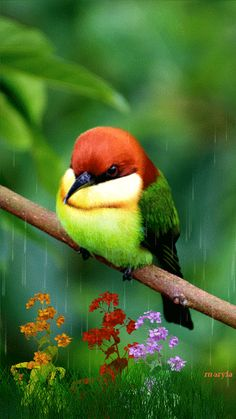 PRETTY BIRD ON A TREE BRANCH IN THE RAIN