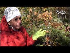 """Как сажать верески и рододендроны. Сайт """"Садовый мир"""" - YouTube"""