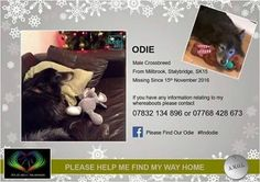 Please share!Odie is still missing!We are asking for donations please to help to pay for an advert to go on the front page of the Tameside Advertiser. The advert costs over £500 with the help of all of you lovely people we have already raised £178 since yesterday. Thank you all sooooooo much.Please keep sharing weRead More