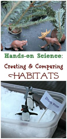 Animals & Forest Animals: Comparing Animal Habitats Arctic animals and Forest animals - Comparing Habitats with this easy hands-on science activity!Arctic animals and Forest animals - Comparing Habitats with this easy hands-on science activity! Preschool Science, Science Fair, Science For Kids, Life Science, Science Today, Primary Science, Science Quotes, Preschool Themes, Elementary Science