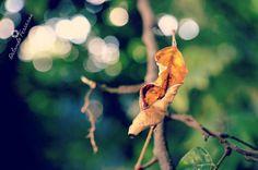 "Interesting one by orlandoferreras #landscape #contratahotel (o) http://ift.tt/26fYUCt""I still believe in life"" (""Sigo aferrado a mi existencia"") #photography  #nature #flora #leaf #tree #colorful #color #life #inspiration #fotografia #paisajes #naturaleza #hojas #renacer #vida #spring #primavera #dominicanrepublic #republicadominicana"