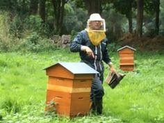 Explication sur la vie d'une colonie d'abeilles. Présentation d'une reine. Travail dans les ruches. Apiculteur M. Gilles, seul producteur de gelée royal en N...