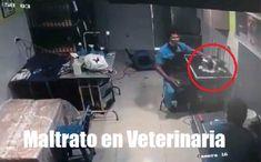 Lejos del mínimo respeto y cuidado por la vida de los animales que debe tener una clínicaveterinaria, un pequeño perrito fue salvajeme... Respect, Dogs, Animales, Life