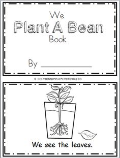 Free Plant Life Cycle Mini Book for Kindergarten