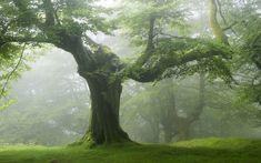 Fenséges Erdő Háttérkép 84