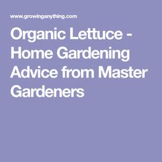 Organic Lettuce - Home Gardening Advice from Master Gardeners