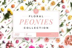 Floral Peonies Colle