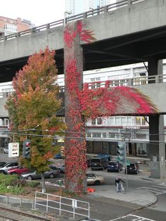 Alaskan Way Viaduct will become a thing of the past in the future. A tunnel is going to replace it and the viaduct will be torn down.