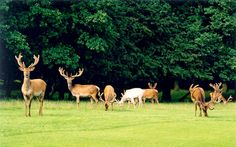 Jægersborg Deer Park is managed by the Danish Forest and Nature Agency under the Ministry of the Environment.