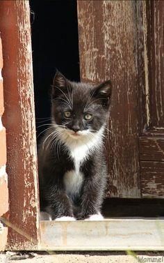01-09-2016. Kitty in the brown rustic door.