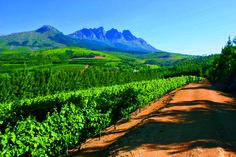 Doolhof Wine Estate Vineyards