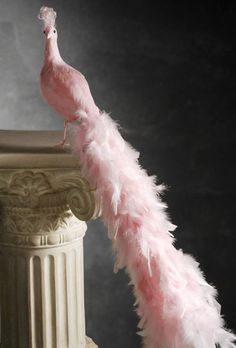 Pink Feather Peacock