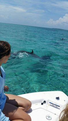 Dolphin excursions - West End and Lucaya, Grand Bahama Island