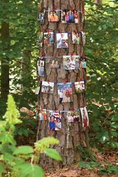 A Family Reunion - invite family to bring photos (or to send photos if they can't attend) to pin around a tree.