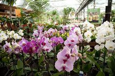 I <3 piante e fiori