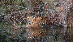 Royal Reflections Photo by Nirmalya Chakraborty — National Geographic Your Shot