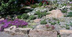 växt som breder ut sig som matta Berg, Garden Ideas, Outdoor Decor, Rockery Garden, Stones, Landscaping Ideas, Backyard Ideas