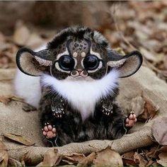 Madagascar, southeast África monkey