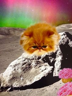 Space Cat #meow #cat #space
