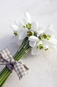 Holiday Party Discover Vertical Photograph - Bunch Of Snowdrops (galanthus Nivalis) With Purple Ribbon by Juliette Wade White Anemone White Tulips White Roses White Flowers Beautiful Flowers Purple Ribbon Rose Cottage Hello Spring Lily Of The Valley White Anemone, White Tulips, White Flowers, Beautiful Flowers, White Roses, Ikebana, Flower Arrangements Simple, Purple Ribbon, Ribbon Rose