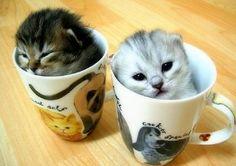 kiddens in da cup