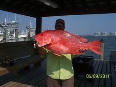 Caught on the Haulin Ash out of #Orange Beach.