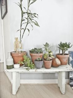 #succulentes, #cactus, #green http://barefootstyling.wordpress.com/