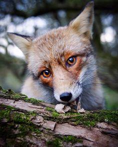 Konsta Punkka fotografias de animales silvestres 7