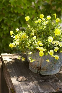 rustic planter filled with blooming yellow pansies Love Flowers, Yellow Flowers, Spring Flowers, Beautiful Flowers, Beautiful Gardens, Country Farm, Country Life, Country Living, Fresco