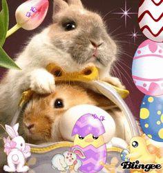 Happy Easter,anuschkatim