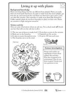 parts of a plant roots information sheet worksheet plants pinterest. Black Bedroom Furniture Sets. Home Design Ideas
