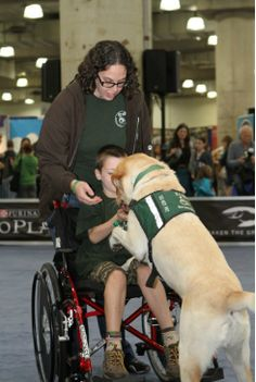 "ECAD Service Dogs Russ showing ""My Lap"" at Meet the Breeds in NYC ! #servicedogs #AKC"