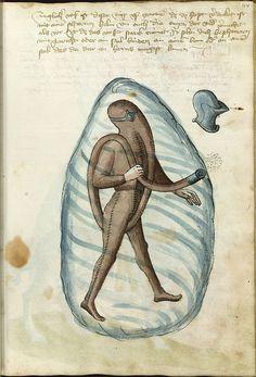 Taucher aus Talhoffers Fechtbuch von 1459. http://wiktenauer.com/wiki/Talhoffer_Fechtbuch_(MS_Thott.290.2º)