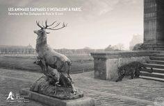dans-ta-pub-animaux-paris-zoo-publicis-conseil-1