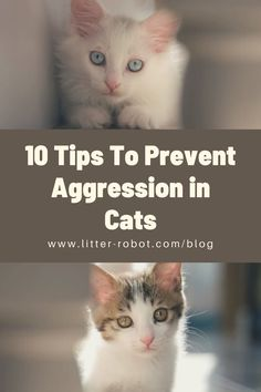 In this post, Dr. Justine Lee discusses the top 10 tips to prevent aggression in cats!