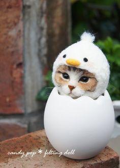 candy pop✴︎羊毛フェルト猫(@candypop_amr)さん | Twitter